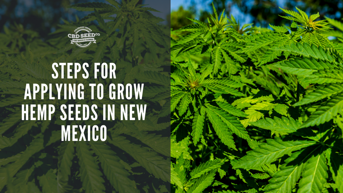 steps apply grow cbd seed new mexico