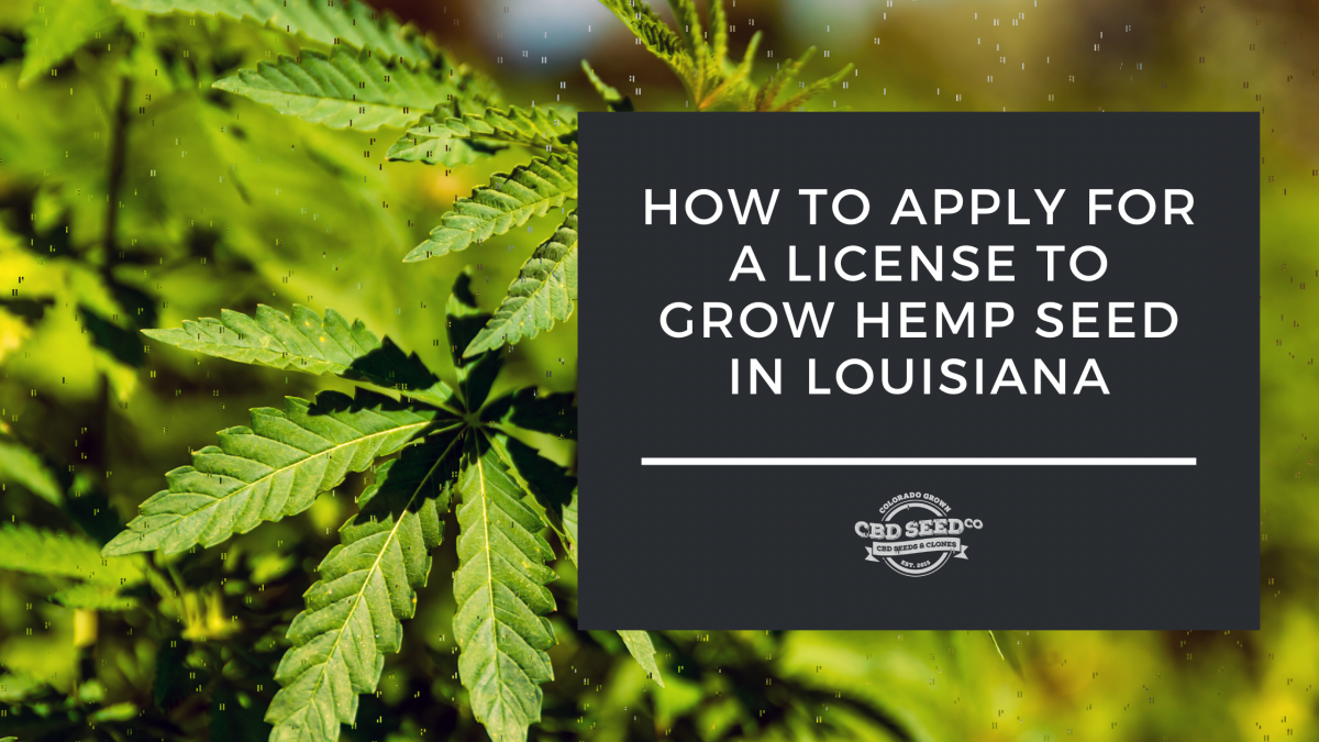 How To Apply For A License To Grow Hemp Seed In Louisiana Cbd Seed Co