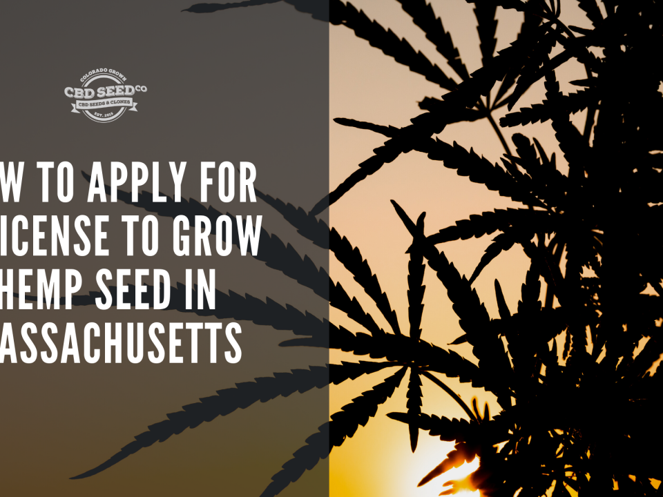 apply license grow hemp seed massachusetts