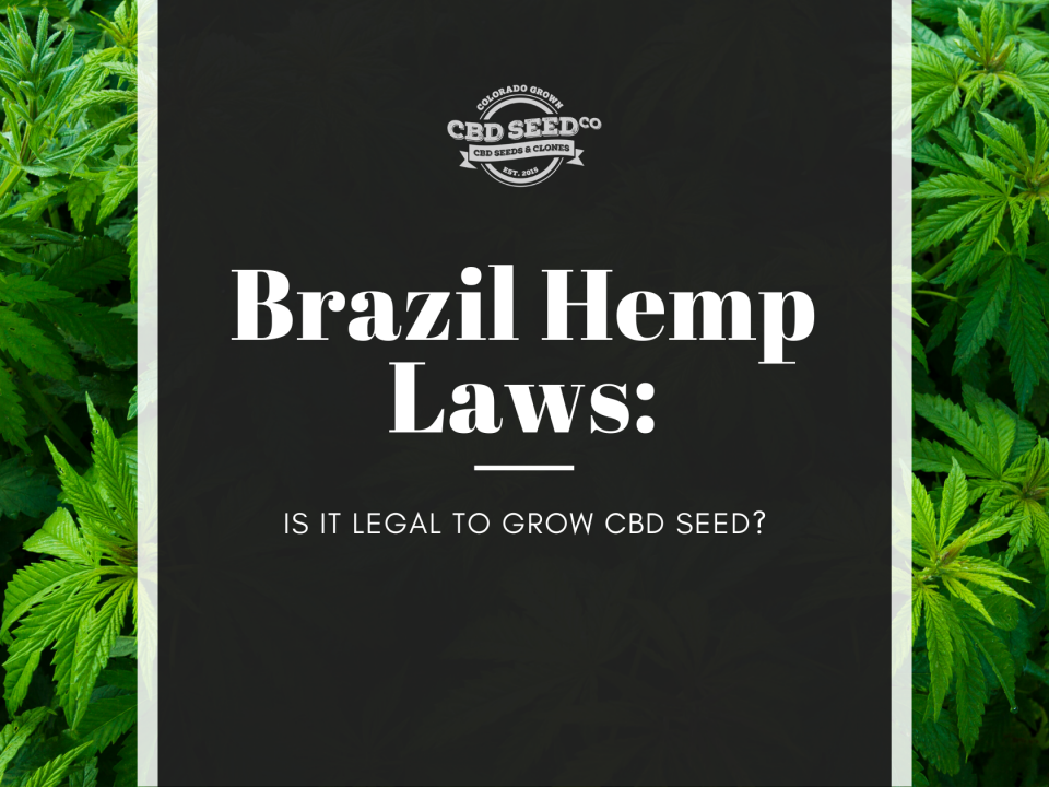brazil hemp laws legal grow cbd seed