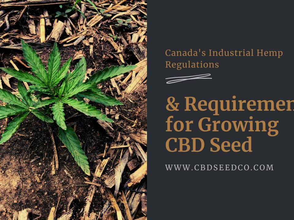canadaindustrial hemp requirements growing cbd seed
