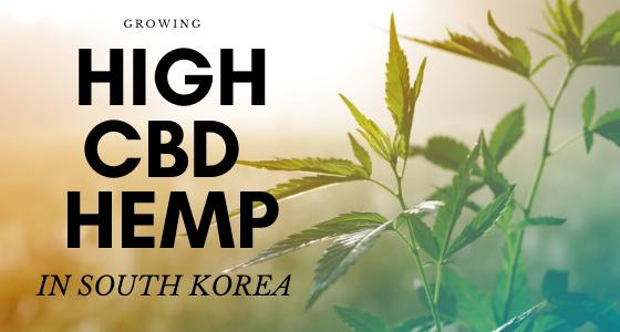 cbd seed south korea