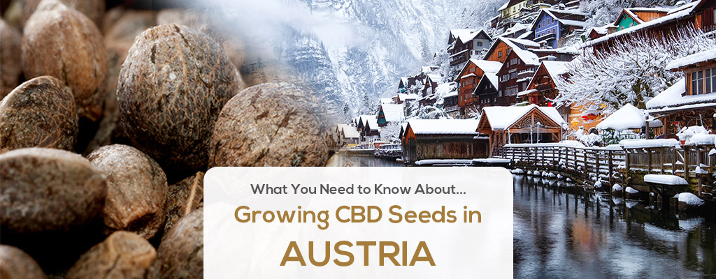 cbd seed austria