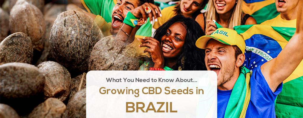 cbd seed brazil