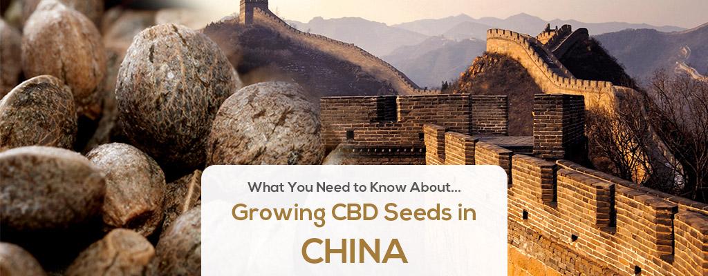cbd seed china