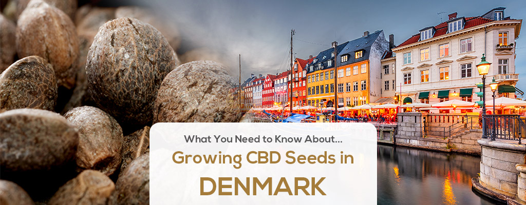 cbd seed denmark