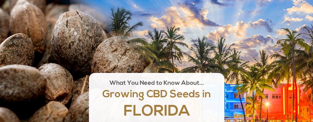 cbd seed florida