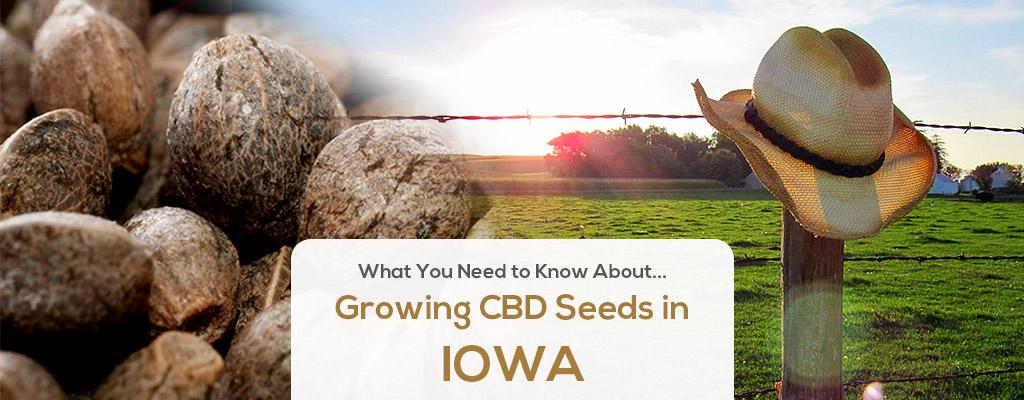 cbd seed iowa