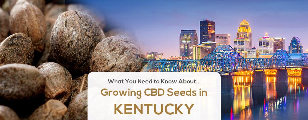 cbd seed kentucky