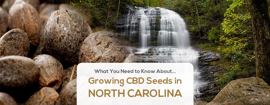 cbd seed north carolina