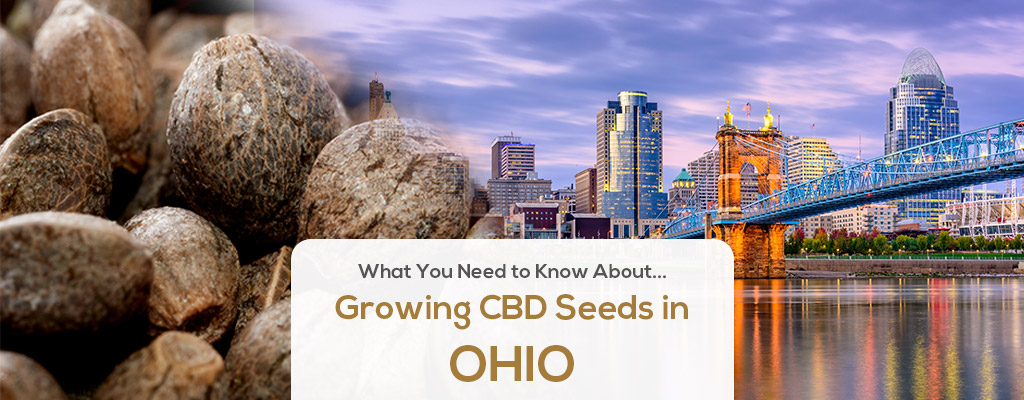 cbd seed ohio
