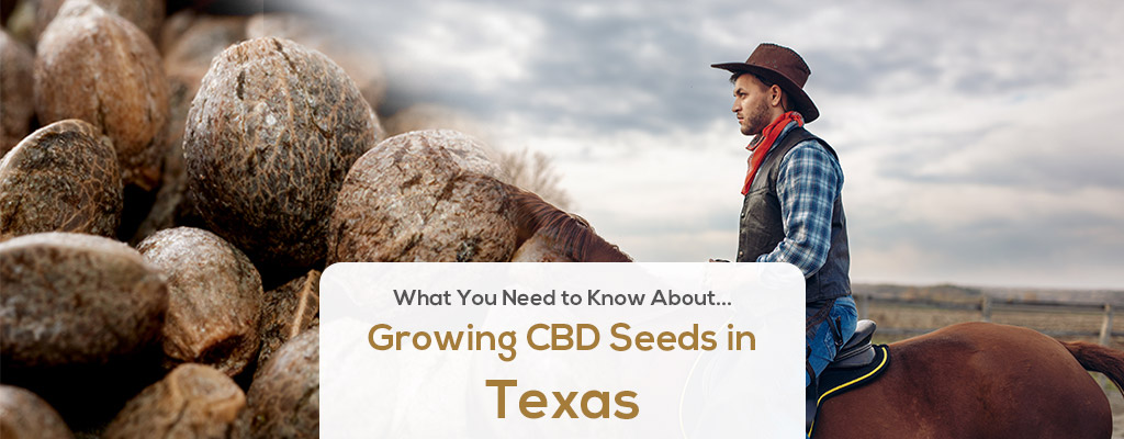 cbd seed texas