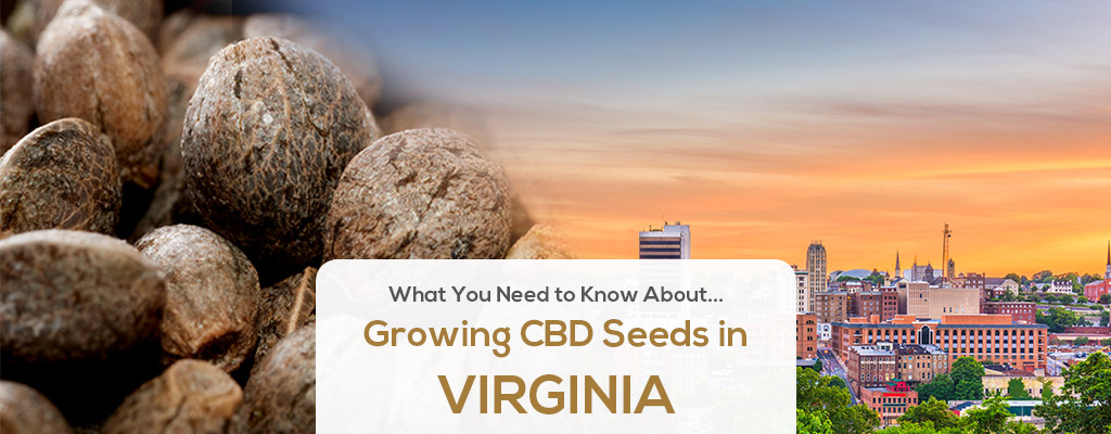 cbd seed virgina