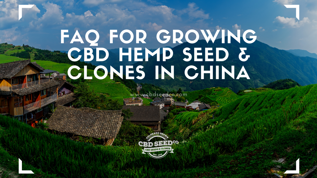 faq growing hemp seed clones china
