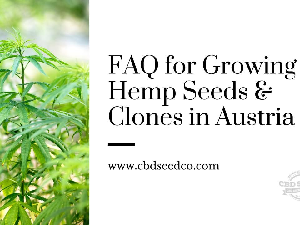 faw growing hemp seeds clones austria