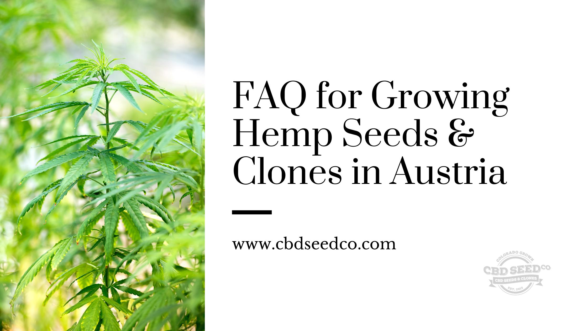 Faq For Growing Hemp Seeds Clones In Austria Cbd Seed Co
