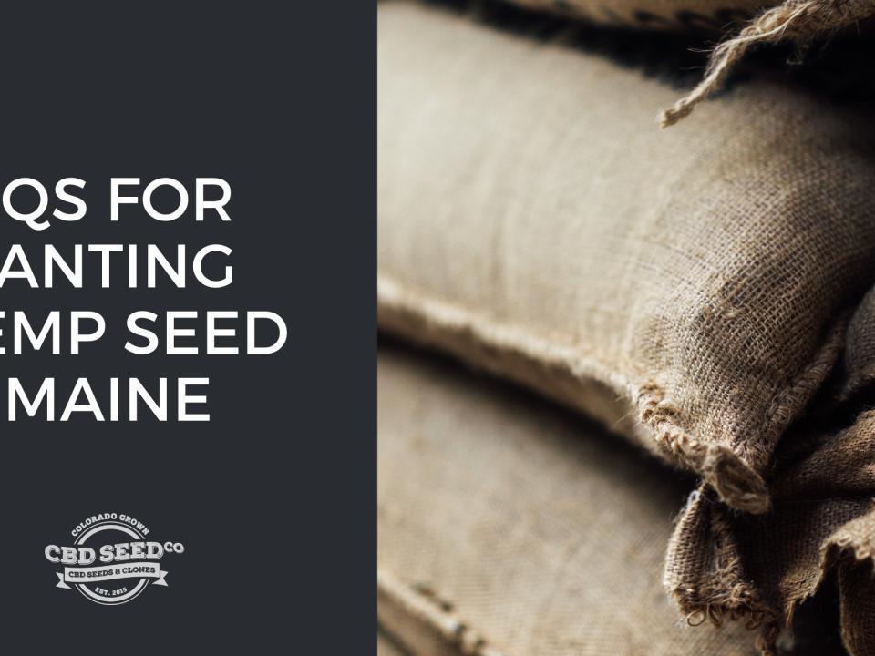 faqs planting hemp seed maine