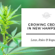 growing cbd hemp seed new hampshire
