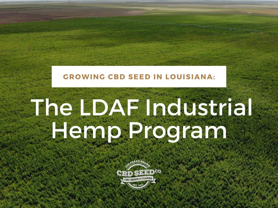 growing cbd seed louisiana hemp program