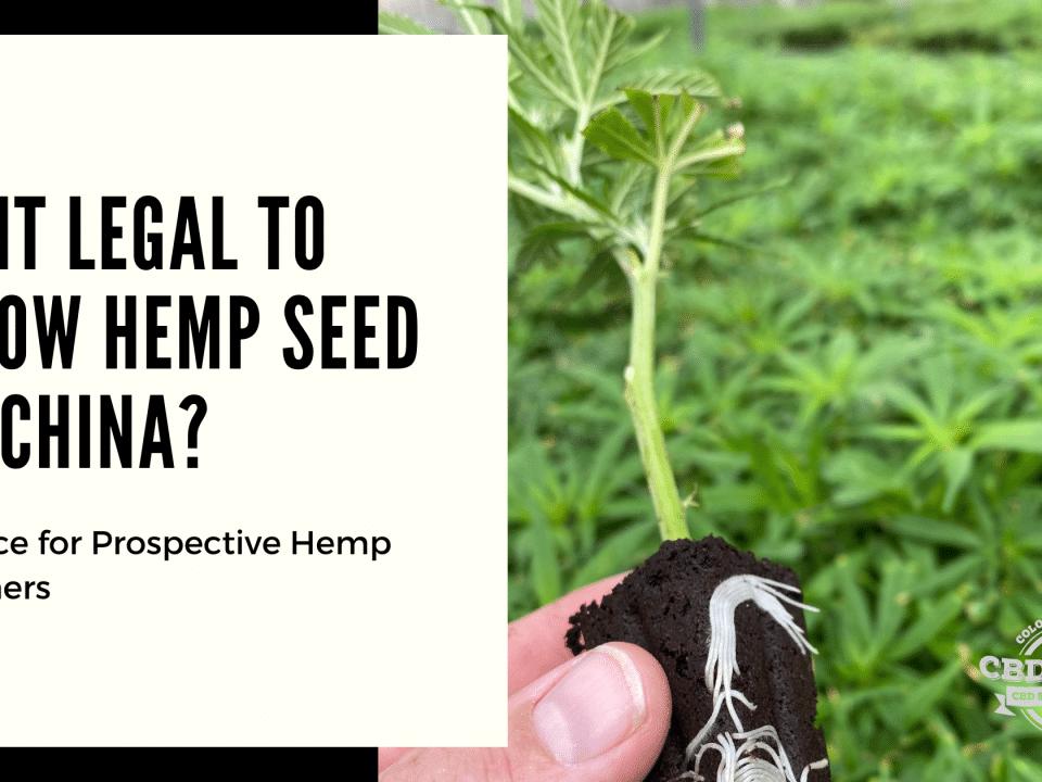 legal grow hemp seed china