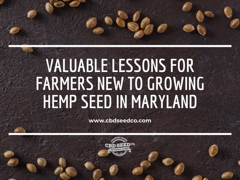 lessons growing hemp seed maryland