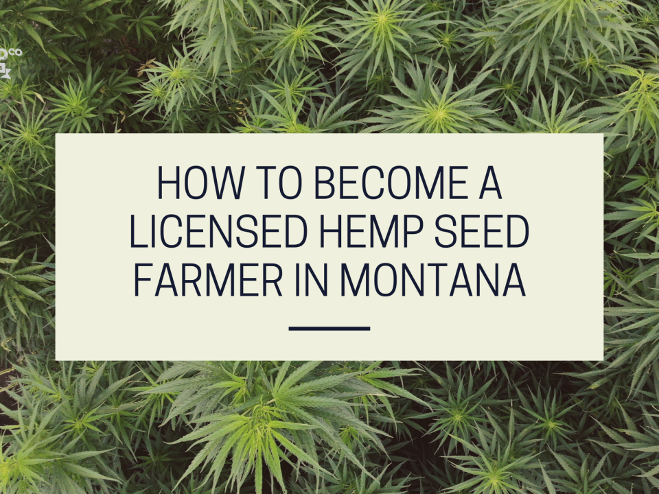licensed hemp seed farmer montana