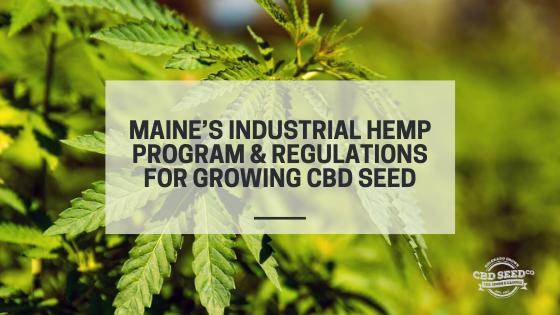 maine hemp program growing cbd seed