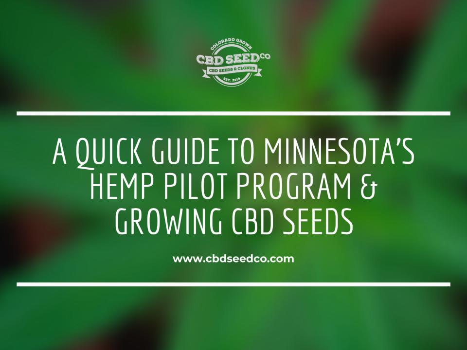 minnesota industrial hemp program growing cbd seed