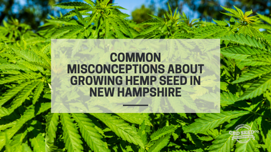 misconceptions growing cbd hemp seed new hampshire