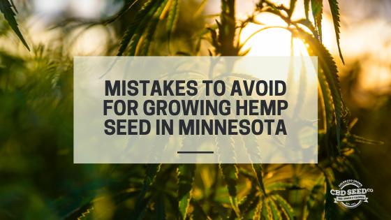 mistakes growing cbd hemp seed minnesota