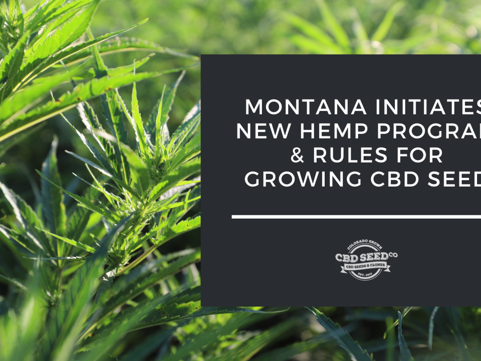montana hemp program cbd seed