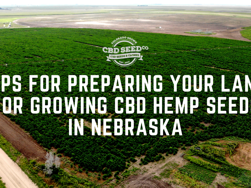 tips for growing cbd hemp seed in nebraska