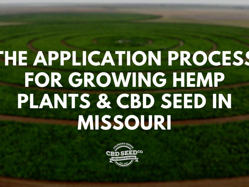 application process growing hemp cbd seed missouri