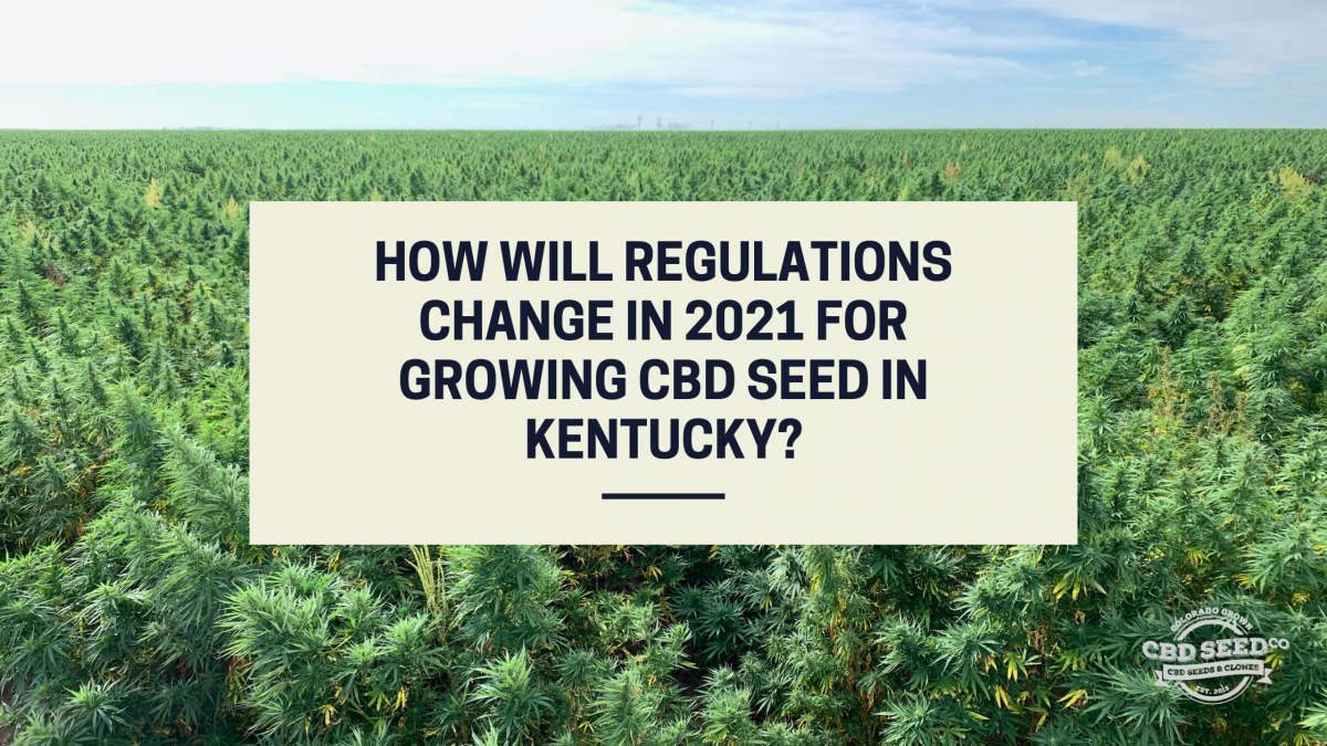 regulations growing cbd seed kentucky 2021