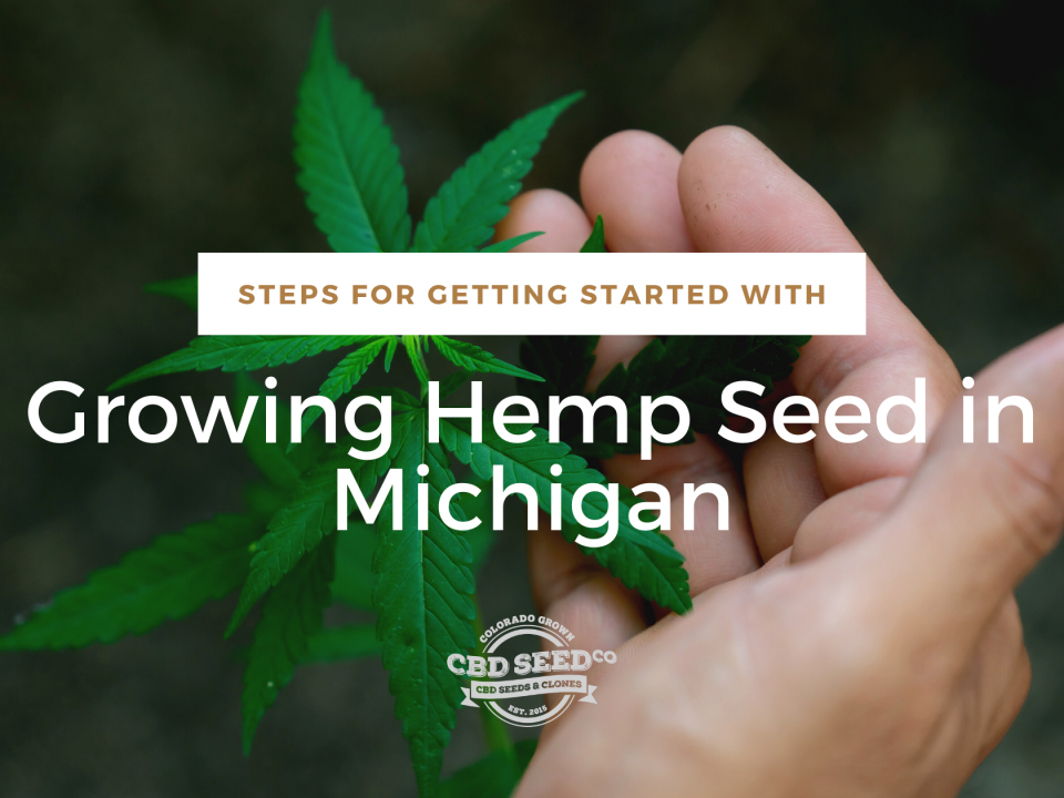 steps growing hemp seed michigan