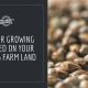tips grow cbd seed illinois farm
