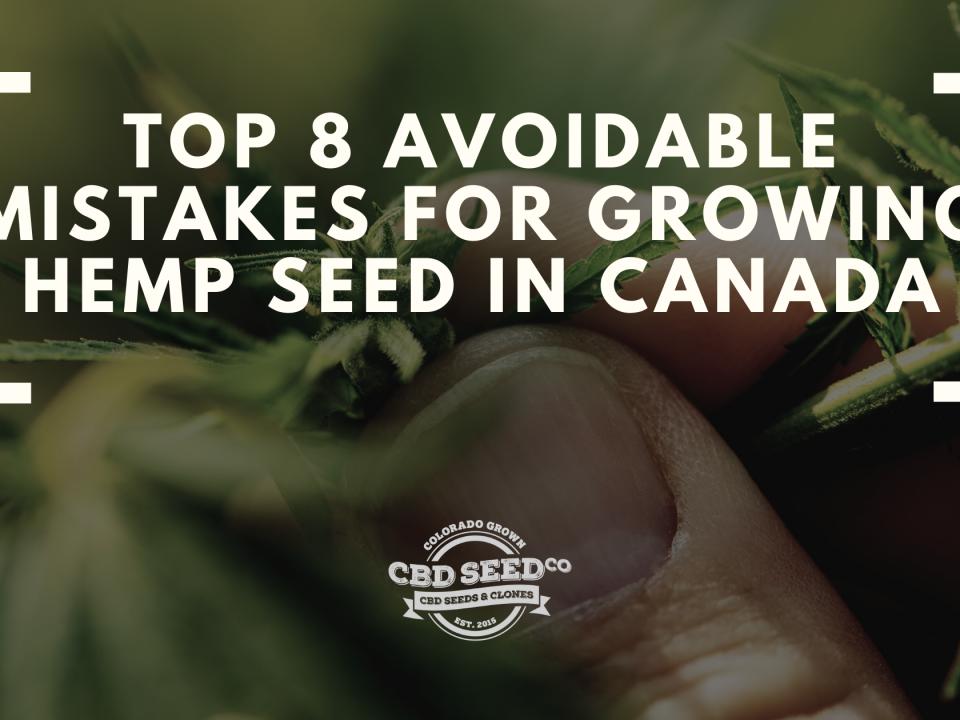 top mistakes growing hemp seed canada