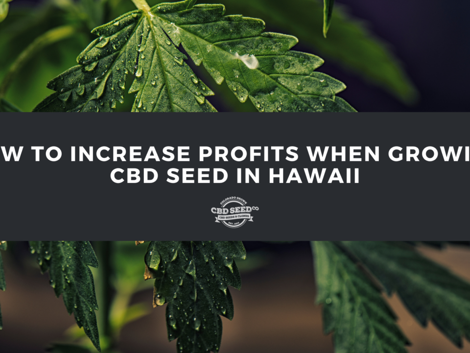 cbd seed hawaii