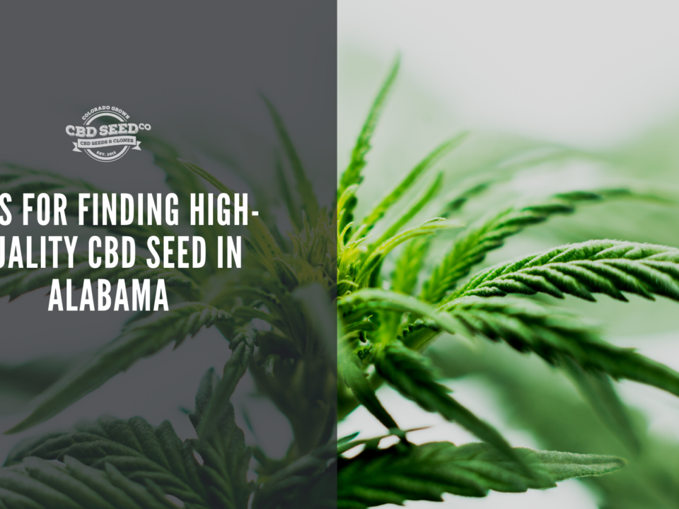 cbd seed alabama