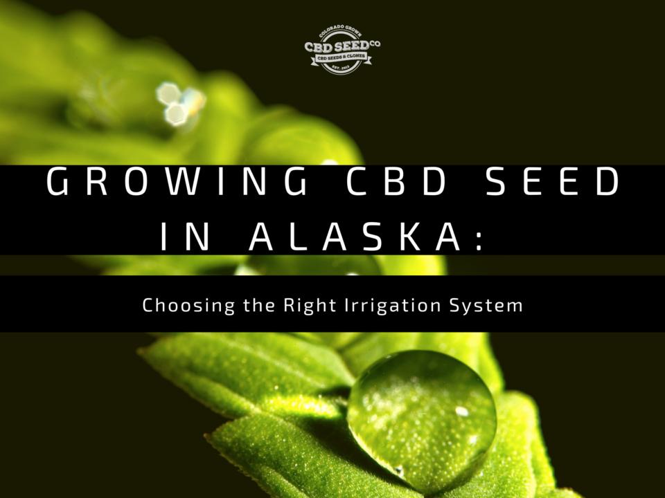 cbd seed alaska