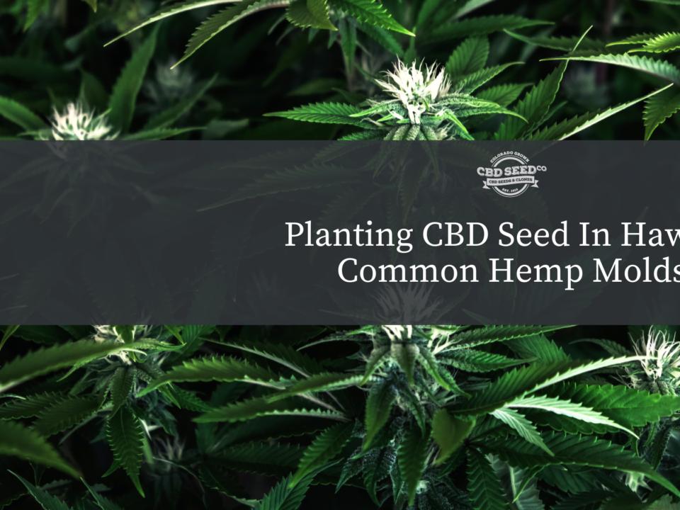 cbd seed hawaii