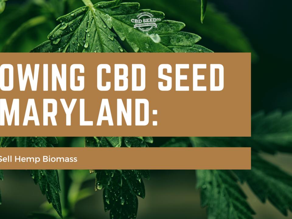 cbd seed maryland