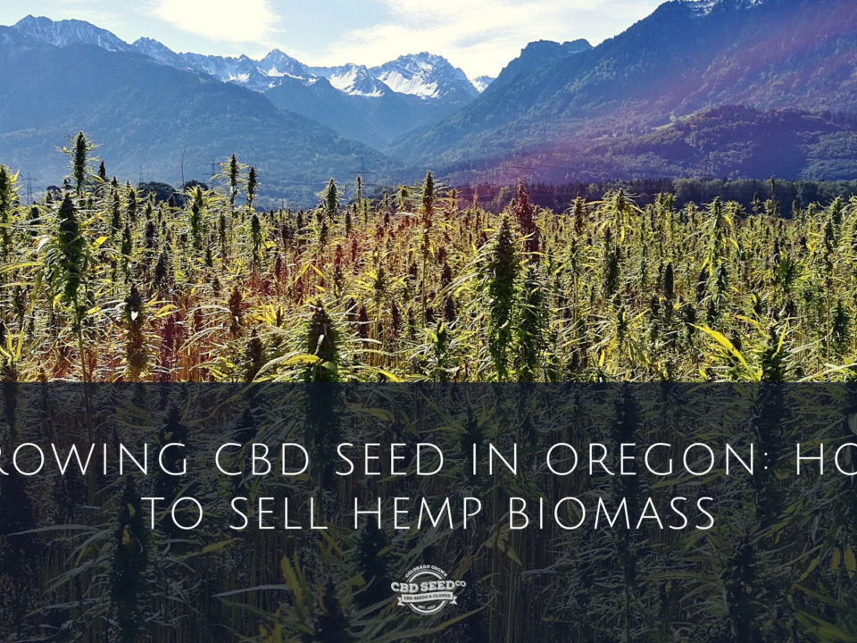 cbd seed oregon