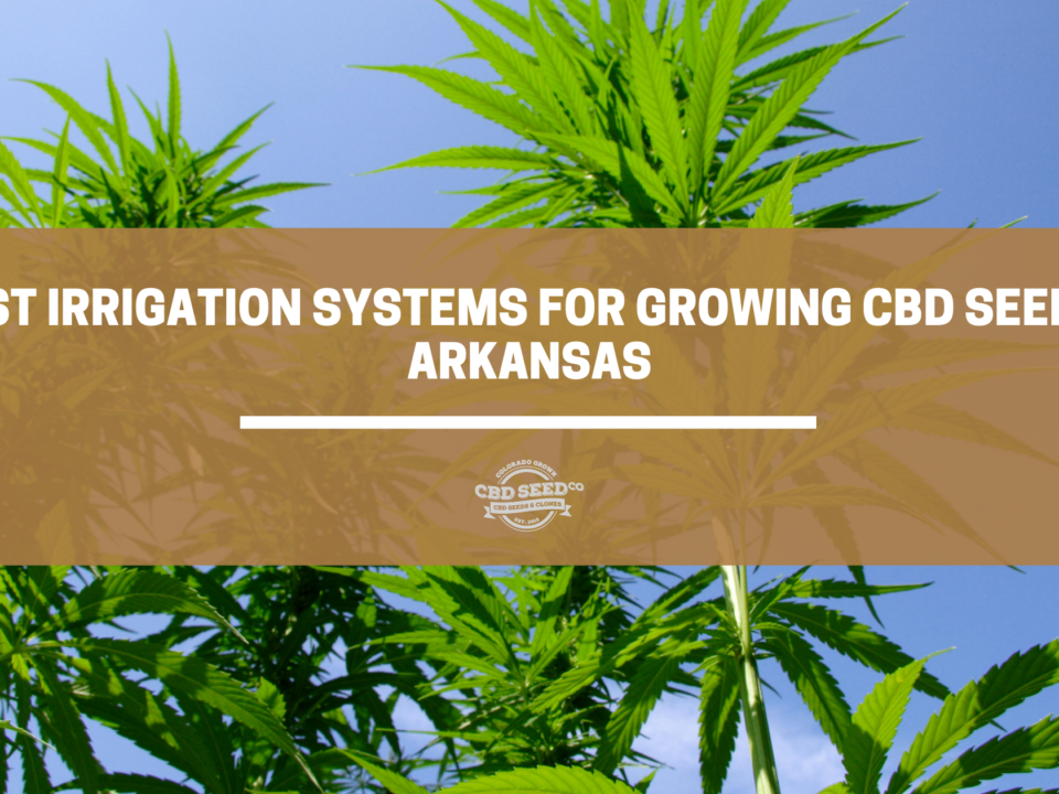 cbd seed arkansas