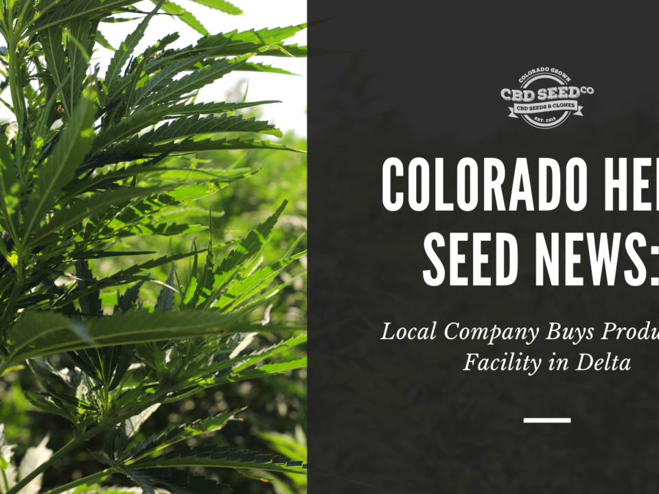 colorado hemp seed news company buys facility