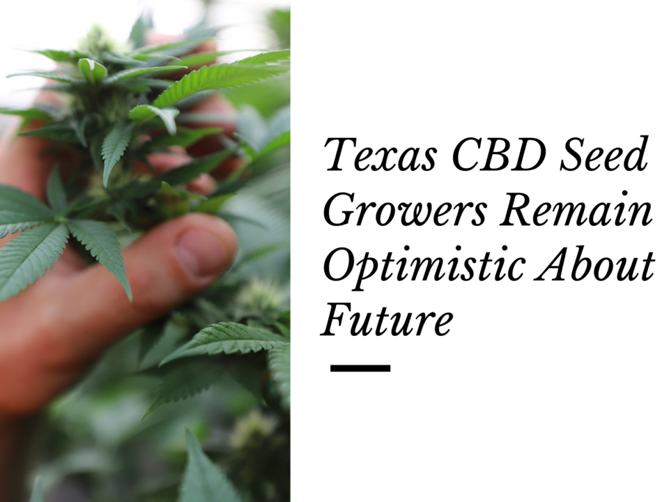 texas CBD seed growers optimistic